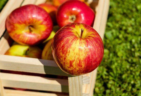 تصویر در ترکیب شگفت انگیز سیب و ترنج و خیار