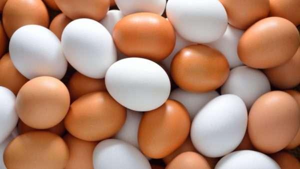 تخم مرغ سفید و قهوه ای