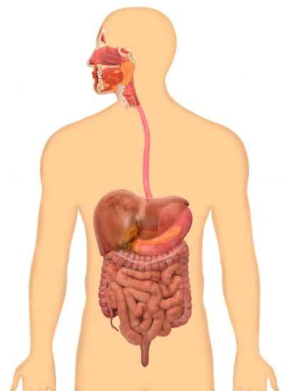 تصویر در دستگاه گوارش و بیماری های آن