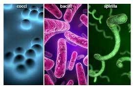 واژینوز باکتریایی ، عفونت واژن